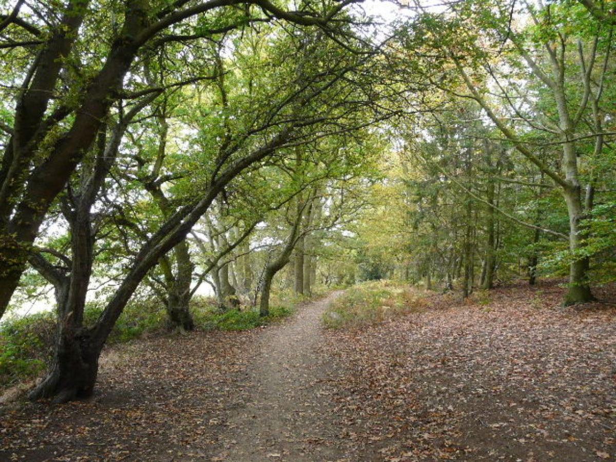 Aspley Woods large photo 1