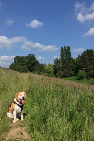 Dog walk at Aubrey Buxton Nature Reserve photo