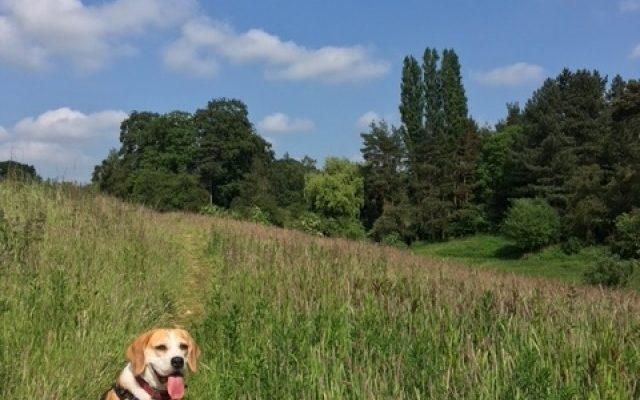 Aubrey Buxton Nature Reserve Dog walk in Essex