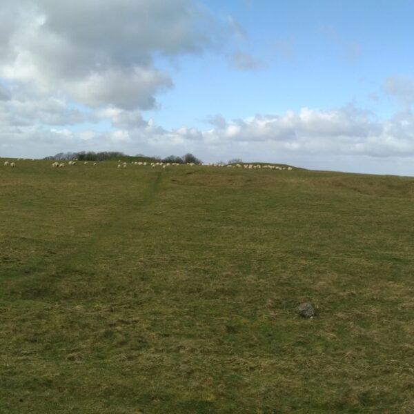 Dog walk at Avebury-Windmill Hill