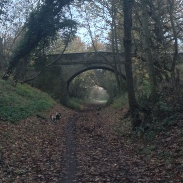 Ayot Greenway photo 1