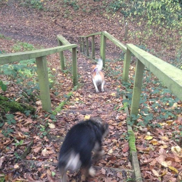 Ayot Greenway photo 4