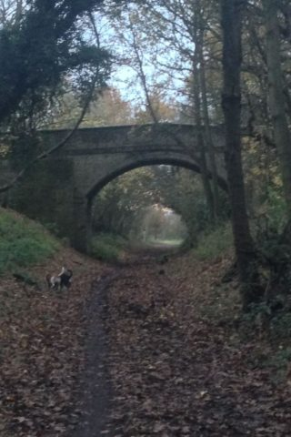 Dog walk at Ayot Greenway photo