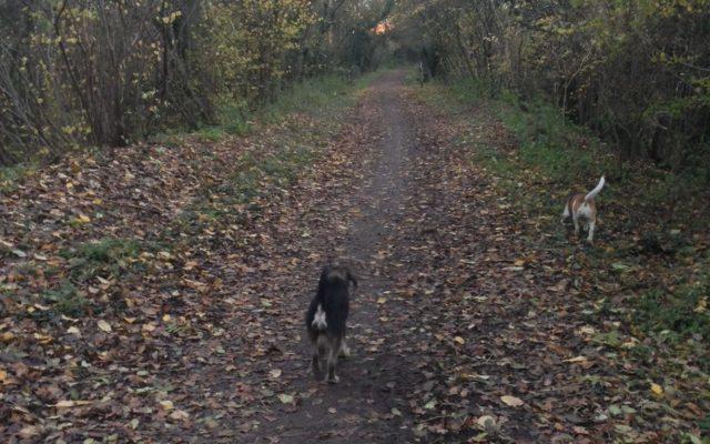 Ayot Greenway Dog walk in Hertfordshire