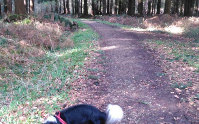 Bacton Woods Dog walk in Norfolk