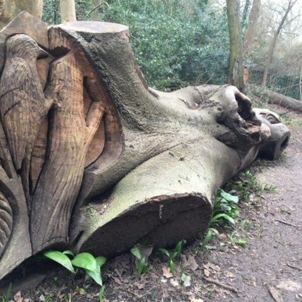 Dog walk at Badock's Wood