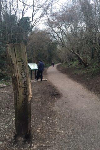 Dog walk at Badock's Wood photo
