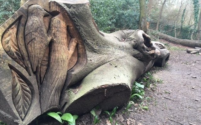Badock's Wood Dog walk in Bristol (City of)