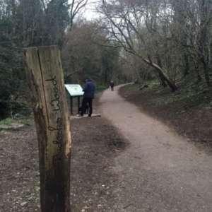 Badock's Wood