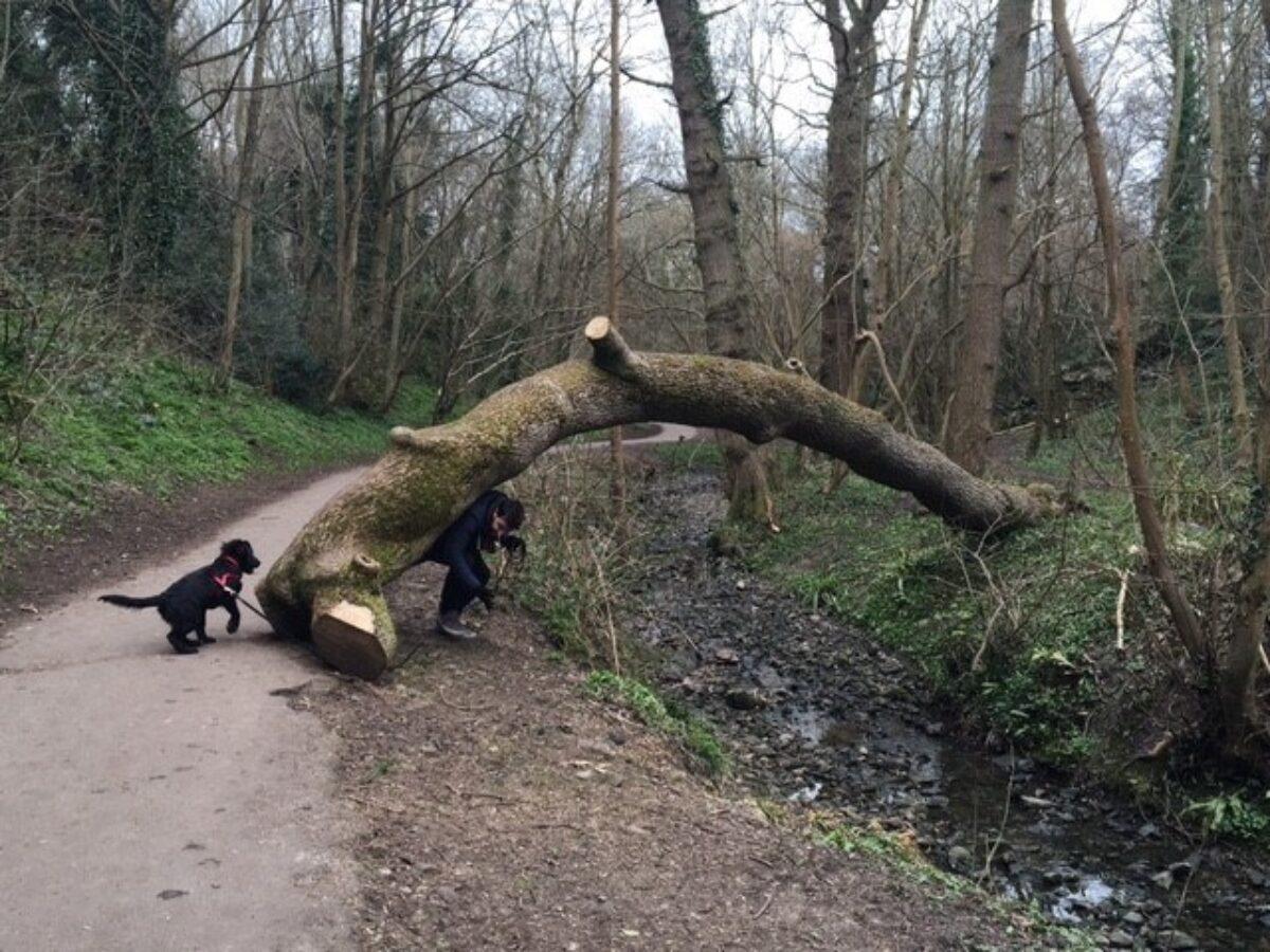 Badock's Wood large photo 4