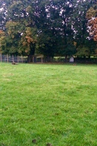 Dog walk at Baffles Dog Field photo