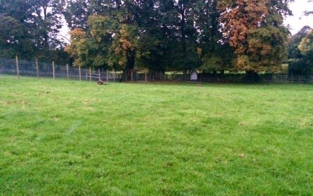 Baffles Dog Field Dog walk in Yorkshire (West)