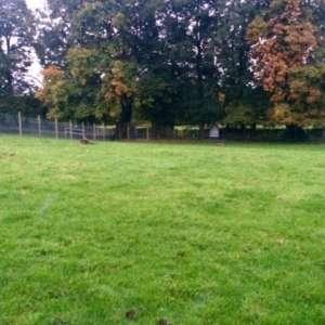 Baffles Dog Field