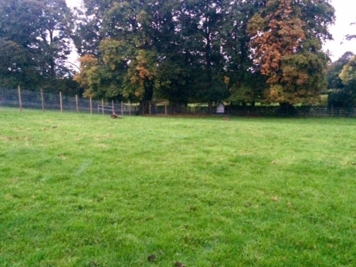 Baffles Dog Field large photo 1