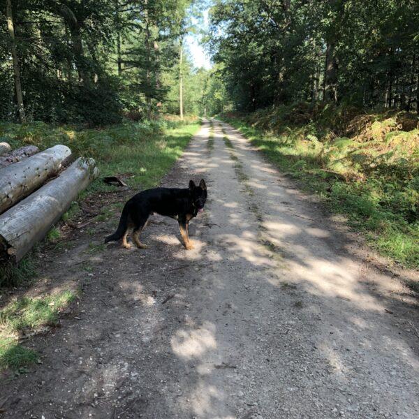 Bagley Wood photo 1