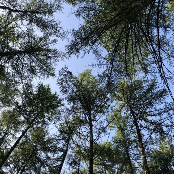 Bagley Wood photo 3