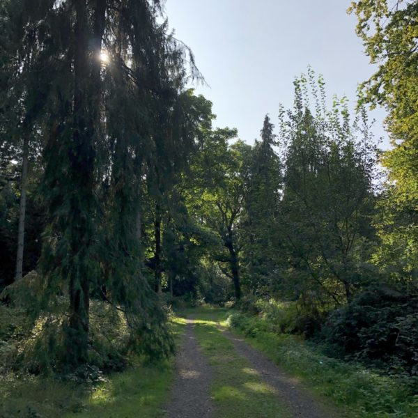 Bagley Wood photo 2