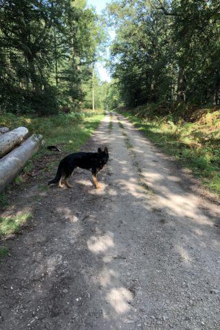 Dog walk at Bagley Wood photo