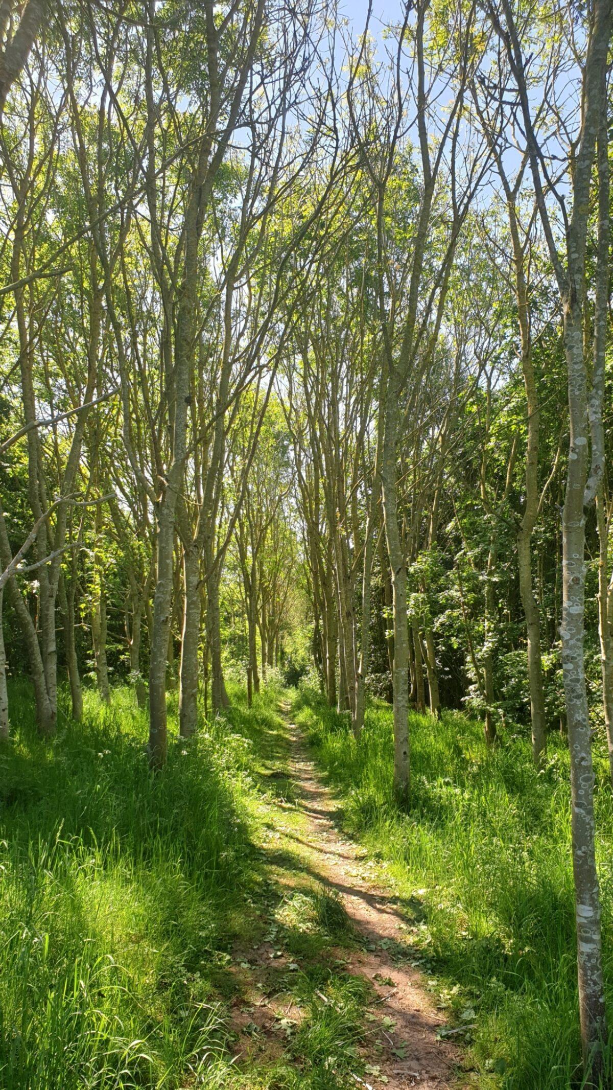 Bagworth Heath Woods large photo 3