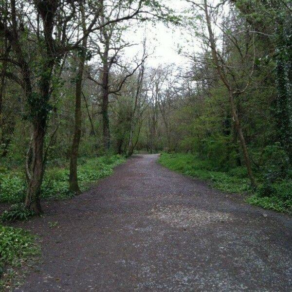 Dog walk at Bakers Park/Bradley Manor
