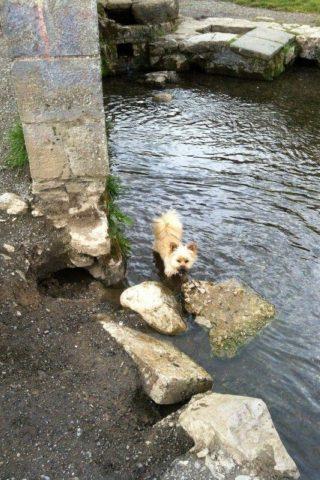 Dog walk at Bakers Park/Bradley Manor photo
