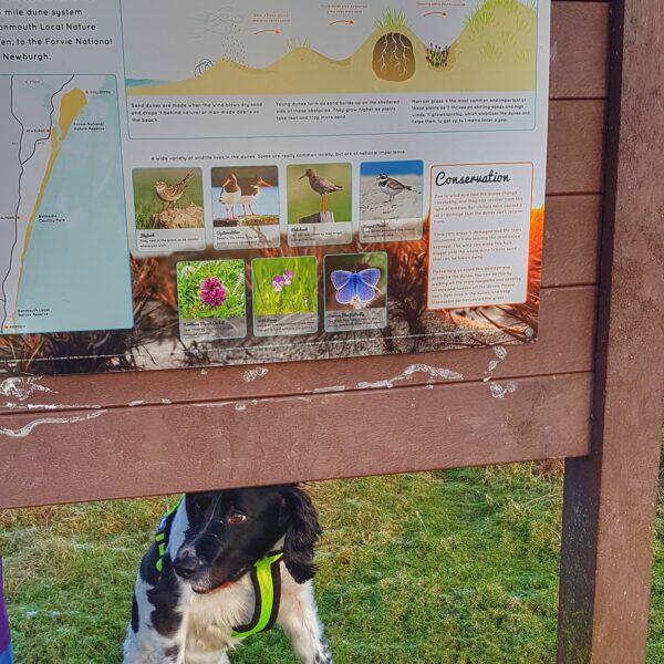 Dog walk at Balmedie Beach