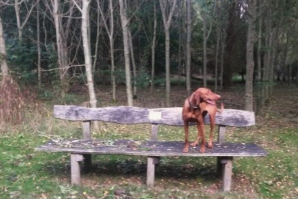 Bampton Dog Walkphoto