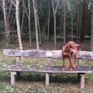 Bampton Dog Walk