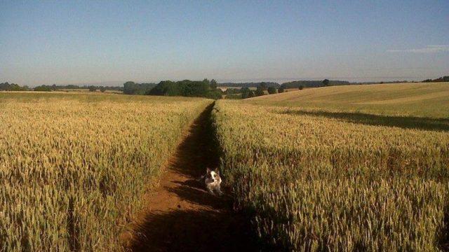 Dog walk at Banbury To Drayton Fields