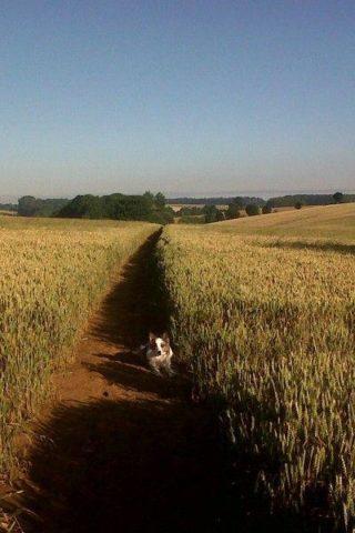 Dog walk at Banbury To Drayton Fields photo