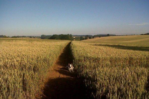 Banbury To Drayton Fieldsphoto