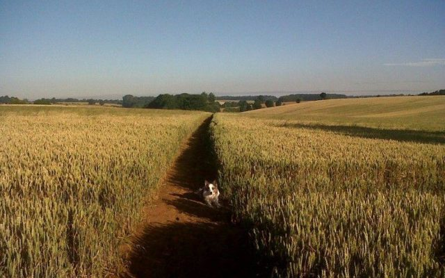Banbury To Drayton Fields Dog walk in Oxfordshire