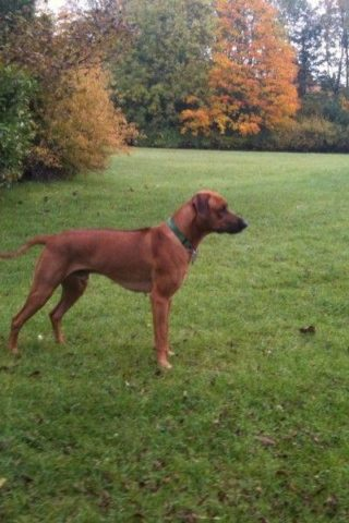 Dog walk at Bancroft Park photo
