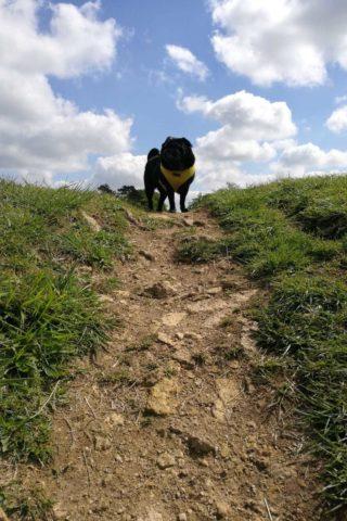 Dog walk at Barnack Hills and Holes photo