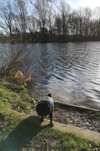 Dog walk at Barnwell Country Park photo