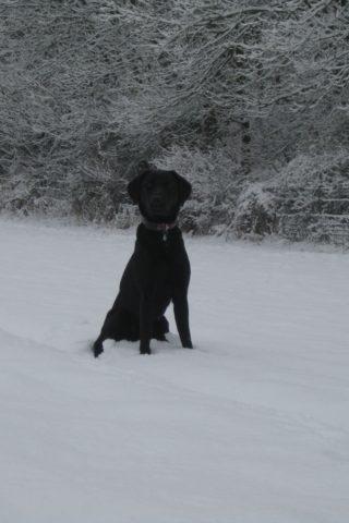 Dog walk at Barton Farm photo
