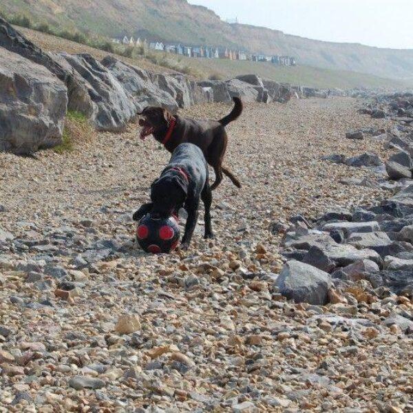 Dog walk at Barton-on-sea, New Milton