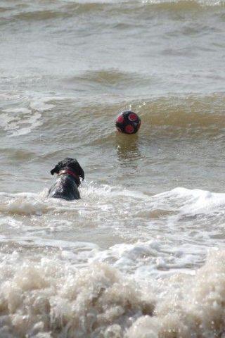Dog walk at Barton-on-sea, New Milton photo