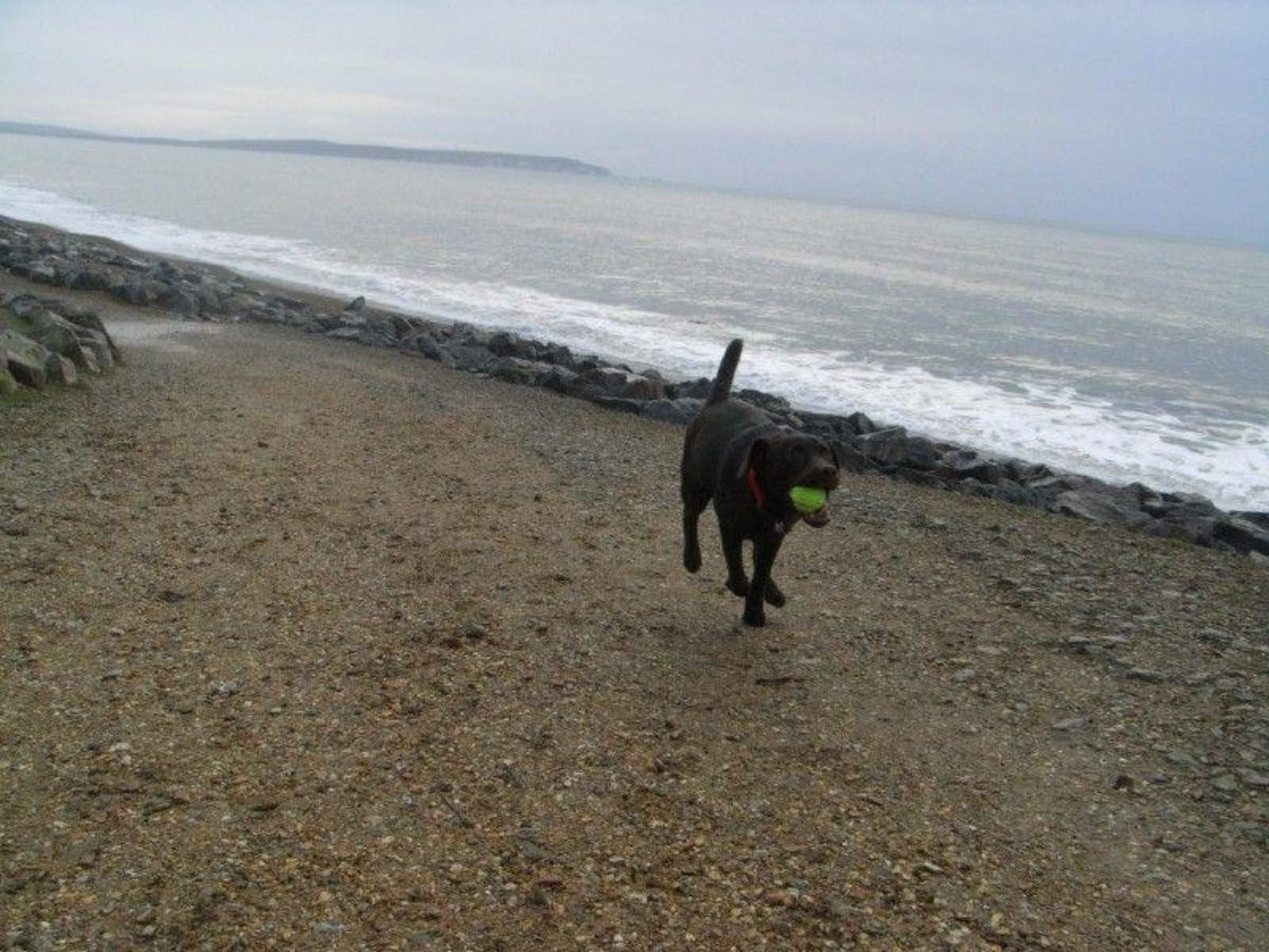 Barton-on-sea, New Milton large photo 5