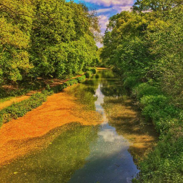 Basingstoke Canal - Sprat's Hatch Lane photo 1