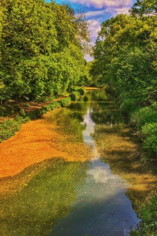 Dog walk at Basingstoke Canal - Sprat's Hatch Lane photo