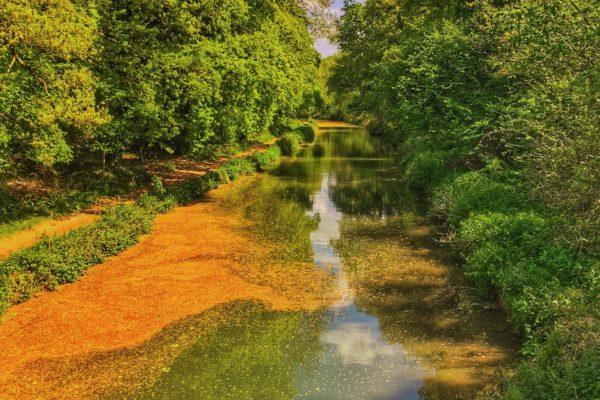 Basingstoke Canal - Sprat's Hatch Lanephoto
