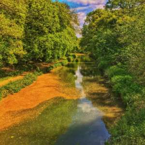 Basingstoke Canal - Sprat's Hatch Lane
