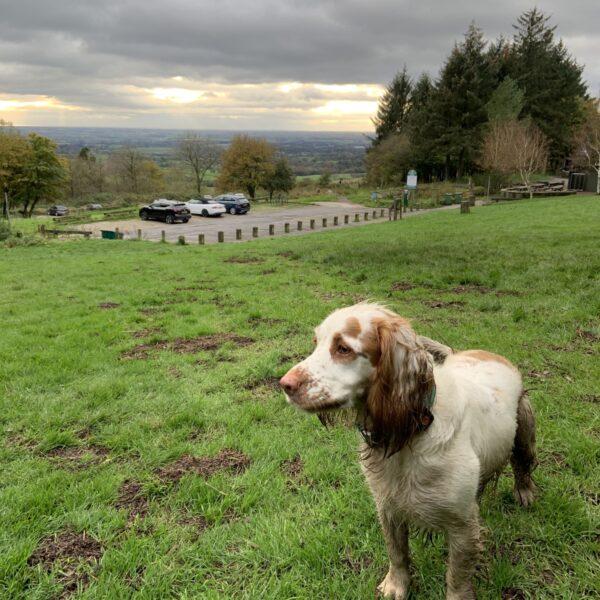 Dog walk at Beacon Fell Walk