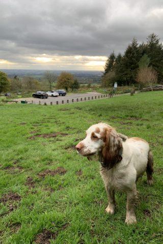 Dog walk at Beacon Fell Walk photo