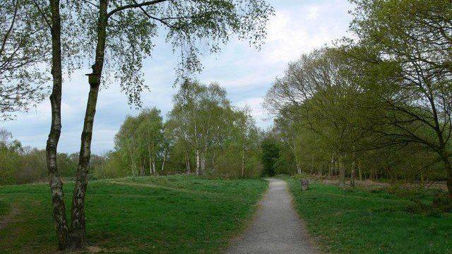 Dog walk at Beacon Hill