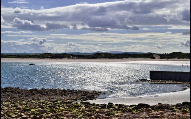 Beadnell Beach Dog walk in Northumberland