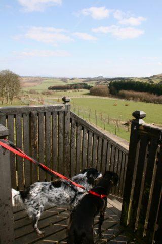 Dog walk at Beecraigs Country Park photo