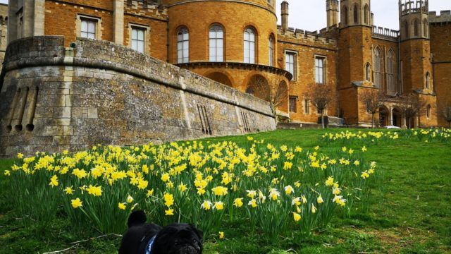 Dog walk at Belvoir Castle