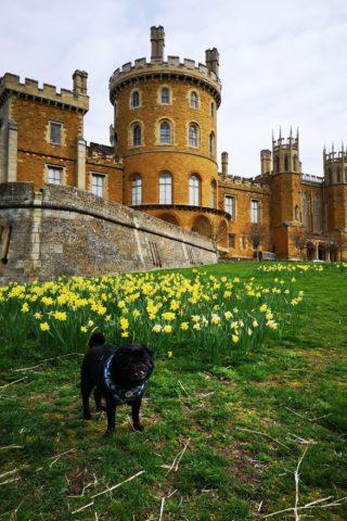 Dog walk at Belvoir Castle photo